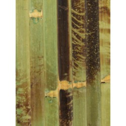 Green bamboo wall cladding